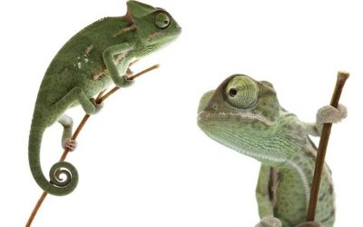 The CIO becomes the Chameleon In Chief